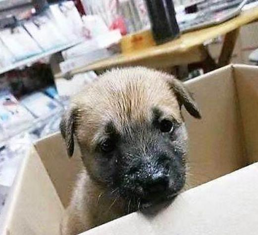 中华田园犬被贱卖,从50降到10块,无人问津,狗妈妈委屈哭了