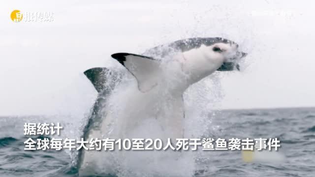 男子潜水捕鱼遇鲨鱼袭击 身亡,成澳洲今年因鲨鱼袭击致命第四人
