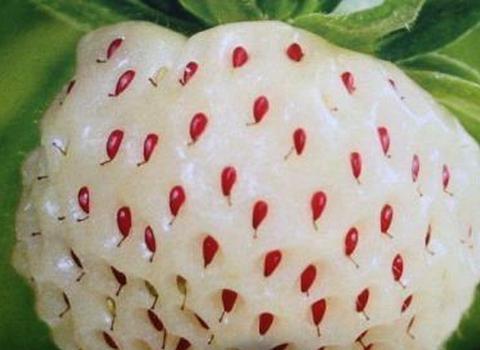 """吃货该如何炫富?日本白草莓,迪拜黑西瓜,中国默默拿出""""它"""""""
