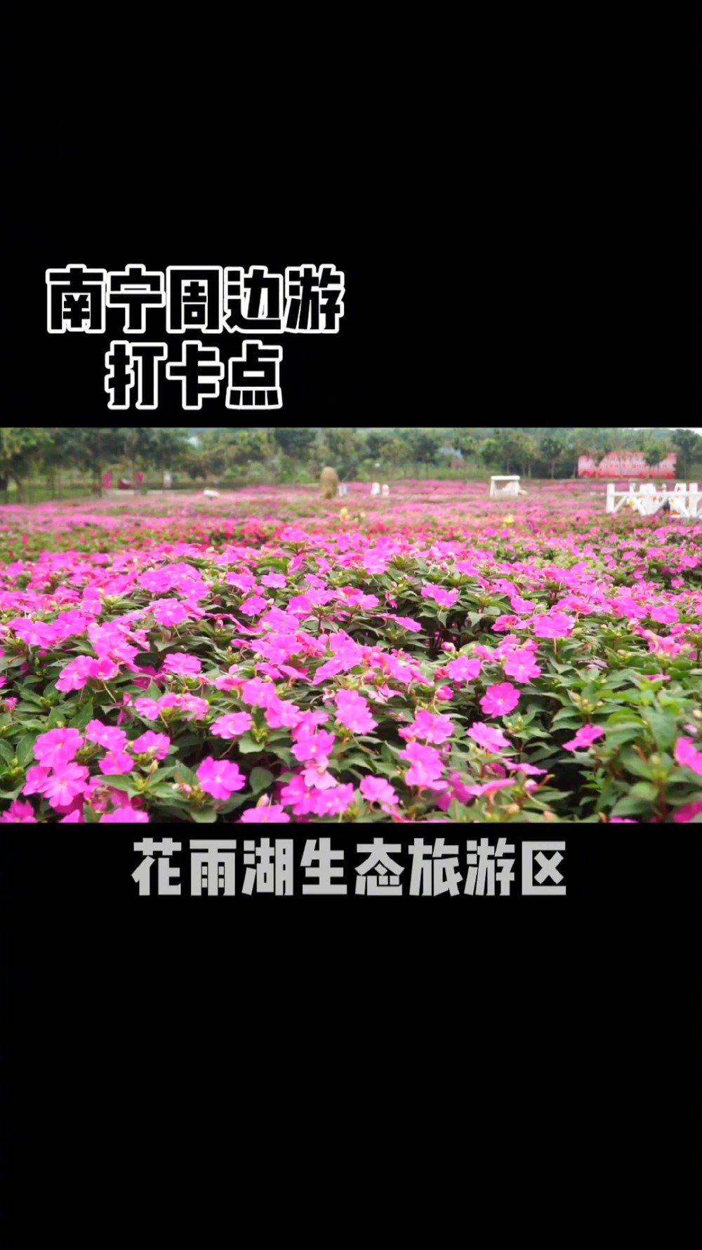 每年必来打卡地!南宁花雨湖生态休闲旅游景区