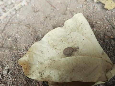 一年能吃上万只白蚁,因价值高遭捕捉,如今5千一斤却很难见到