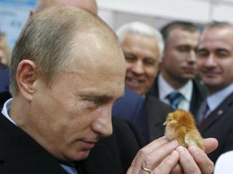 中俄贸易新进展!俄农产品抢占中国市场美国鸡爪换钱将成过去