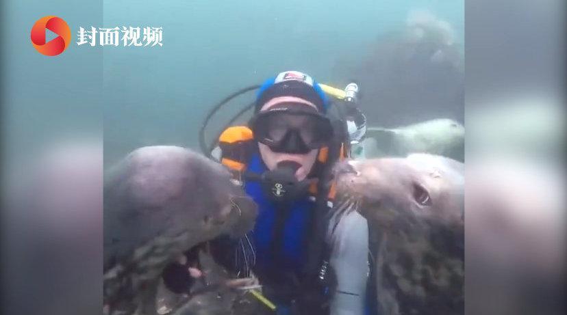 潜水员记录海底和海豹互动一幕 拥抱亲吻像是久违了的朋友