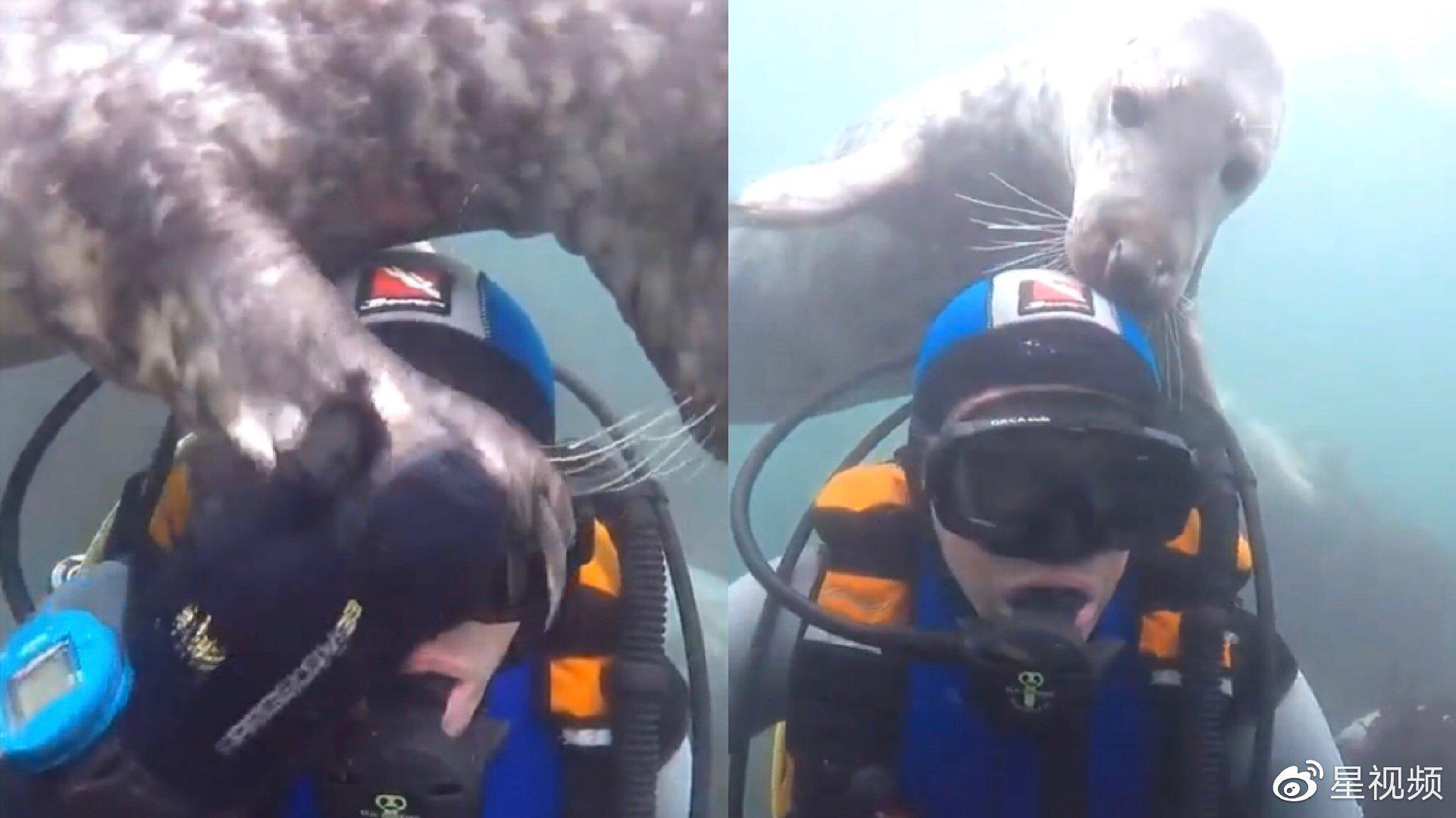 可爱!潜水员偶遇小海豹,彼此亲切互动宛如相识已久
