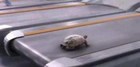 乌龟被放上跑步机,随后乌龟大展实力,龟兔赛跑是不是骗人的?