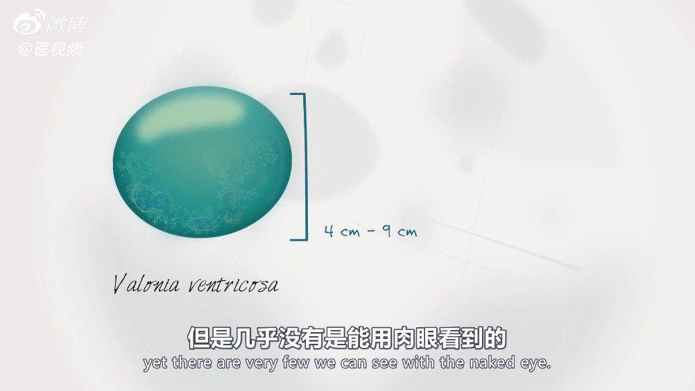 TED科普:最大的单细胞生物什么样