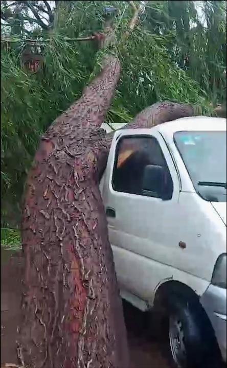 暴雨冰雹侵袭山西同川:大树连根被拔压扁车辆 庄稼苗打蔫了头