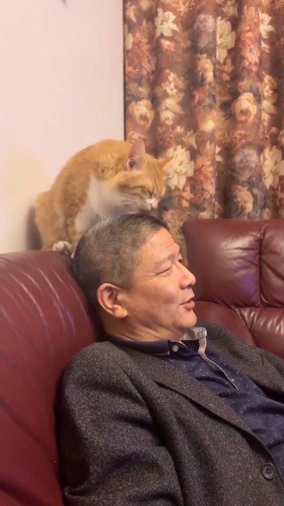 猫咪 :这毛刷子刷的很舒服 !