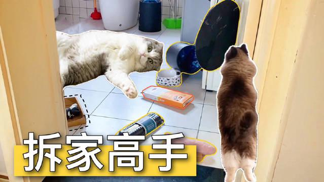 女主人有事外出,15只留守猫在家造反:妈妈已经4天没打我了!