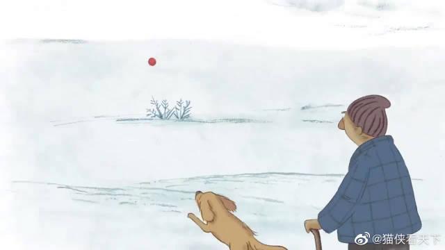 分享一则动画短片《狗狗比利》,比利的主人在深夜逝世后……