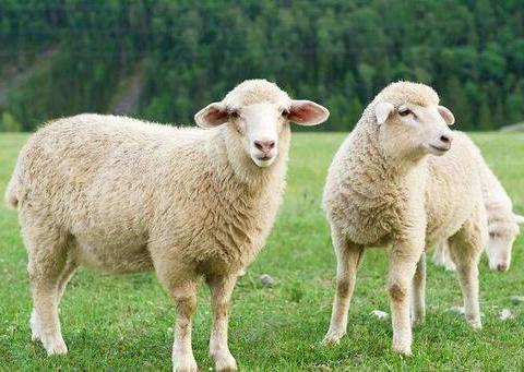 面对七月,属羊人一定要清醒头脑,不能分心