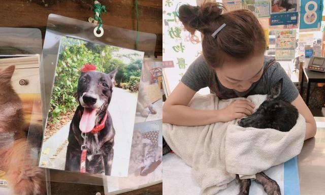不舍被病痛折磨的爱犬痛苦她含泪做宠物安乐:你安心去当天使吧