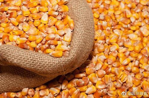 中国玉米供应缺口超出预期 价格上涨超往年