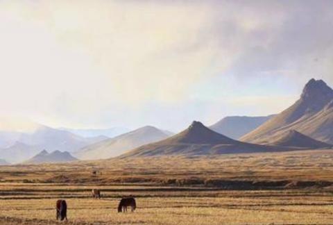 西藏无人区惊现罕见物种,浑身上下全是金色,叫声与猪极为相似!