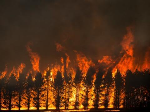 联合国发布评估报告,地球森林面积持续减少,什么原因导致?