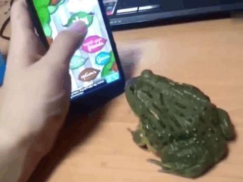 """男子打开手机的""""杀虫子""""游戏逗牛蛙, 没想到最后却自食恶果"""