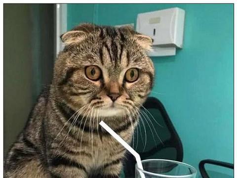 猫咪喝柠檬水,一杯下肚,表情让主人大笑不止
