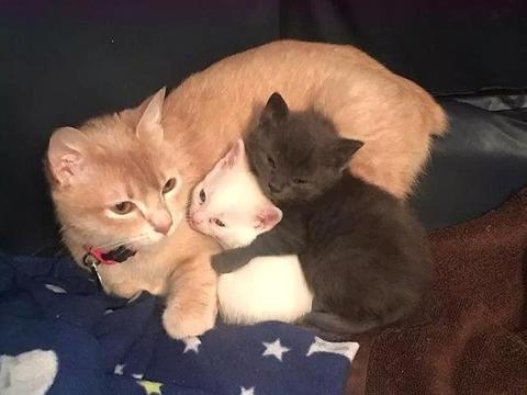 橘猫偷偷藏着5只小猫,毫不理会宠主的叫唤,被发现后只活了2只