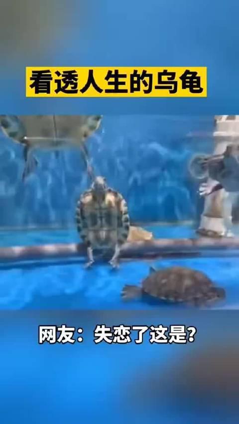 看透人生的乌龟