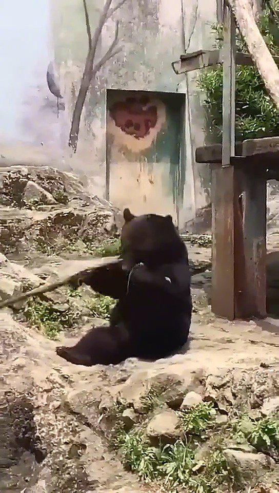 黑熊怪,你不是被观音菩萨收编了吗