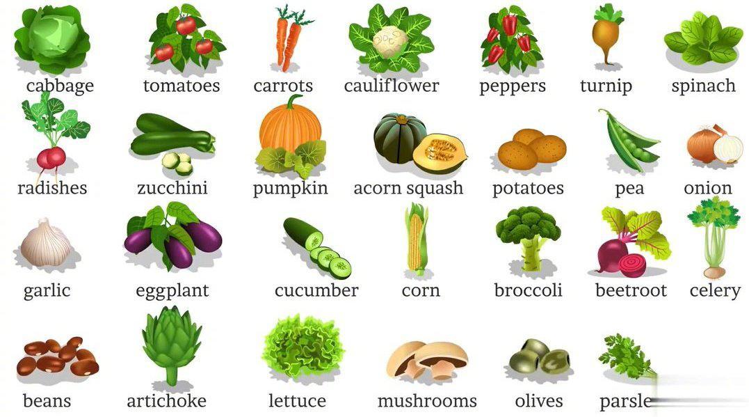 各种蔬菜英语单词大全(双语对照)