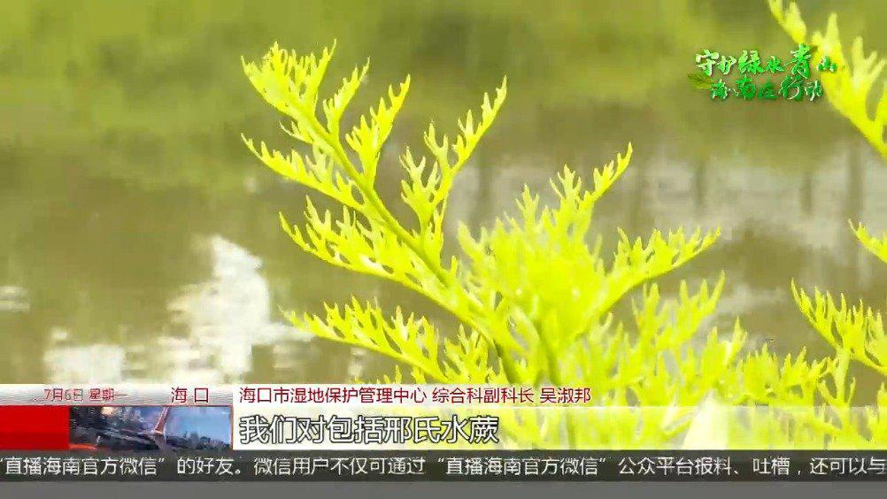羊山湿地发现水蕨属新物种 系国家二级重点保护植物