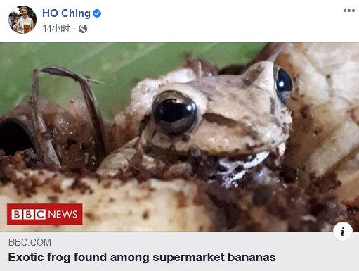 """新加坡第一夫人何晶转发了一条新闻:""""超市香蕉中发现了外来青蛙"""""""