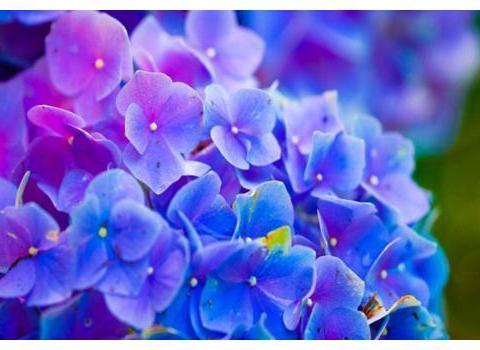 六月底爱情降临,3星座花前月下,享受幸福生活
