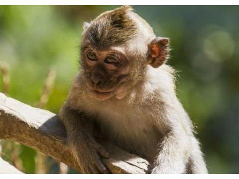 """属猴人再忙也要看看,""""五路""""财神爷在找你,这辈子只有一次!"""