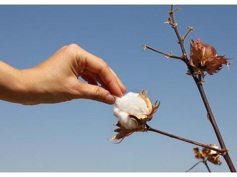 棉花是什么时候引入的?没有引进之前,古人是靠什么方法御寒的?