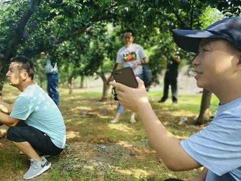 淅川县抖音达人助力杏李销售,帮助果农增收致富