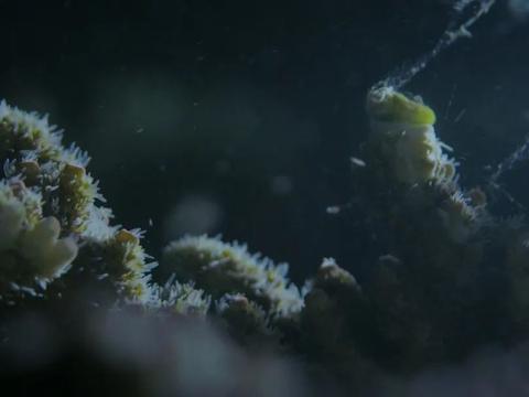 世界潮我看丨海底真的有世界?珊瑚有自己的秘密花园!