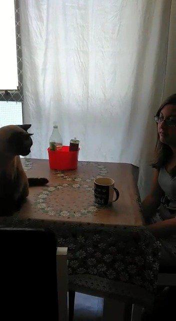 主人把一杯猫屎咖啡放到桌子上之后