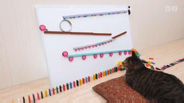 哈哈哈哈哈多米诺骨牌还能这么玩!猫猫只想吃个饭怎么这么难?