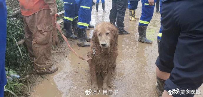 心疼!搜救犬连夜参与救援满身泥泞