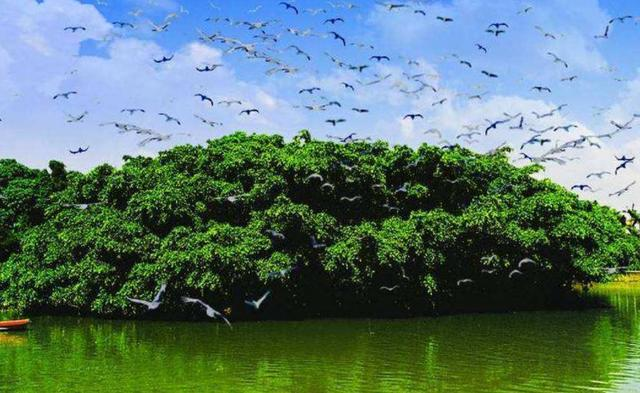 """我国最""""壮观""""的树,一棵树占地20亩,独木成林成旅游景点"""