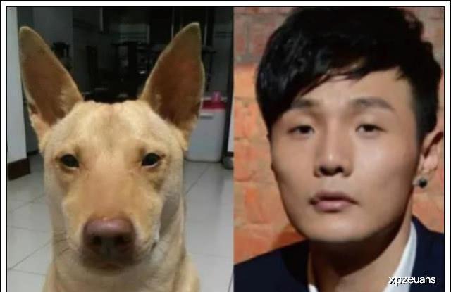 当狗狗长了一张明星脸,你看这个狗它既像孙红雷又像林永健