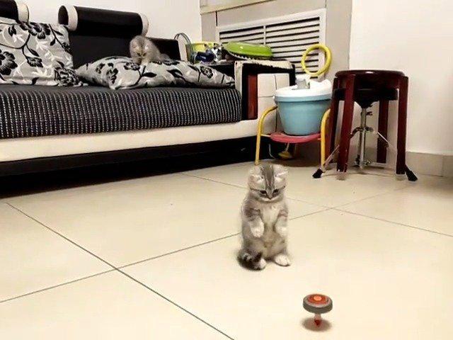 小猫咪 :别动,看这小家伙跳的多开心啊!