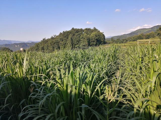 金牧粮草为宜宾珙县荣宏农牧万只种兔千头种猪保供赋能