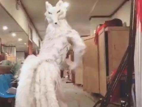小伙去剧组拿东西,开门后发现有只狐狸在跳舞,走近一看笑喷