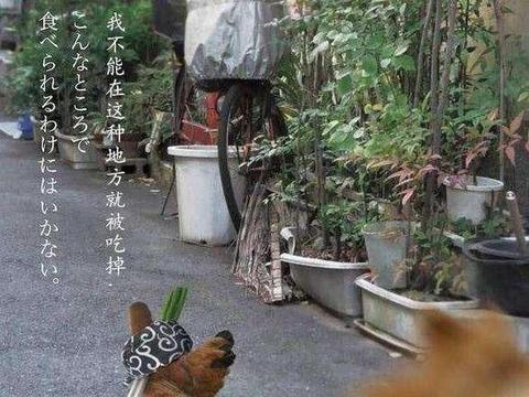 烧鸟才是日本最流行的撸串,从小摊到米其林,一串鸡肉带来的狂欢