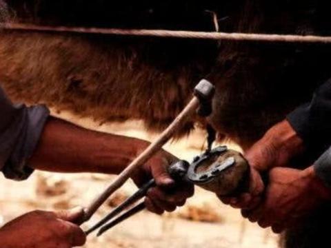 """外国小哥发明""""牛蹄修剪机"""",牛牛很抗拒,主人很开心!"""