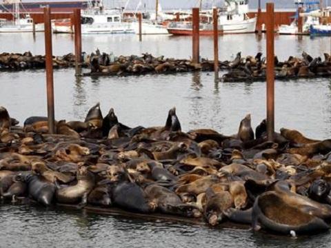 港口被上百只海狮霸占,政府派出虎鲸驱赶却翻船了