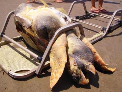 女子在海边发现一个庞然大物,走近查看后这一幕让人羞愧不已!