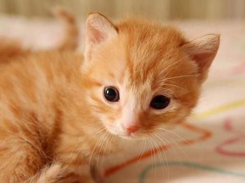 小猫眼里都是泪水