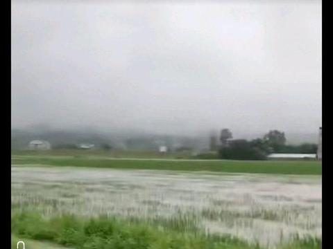 洪涝灾害过后,田间管理如何做?