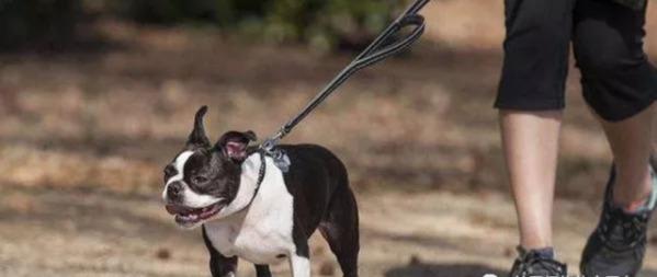 """又见歧视!纽约华女遛狗被白女辱骂歧视:""""吃狗肉的"""