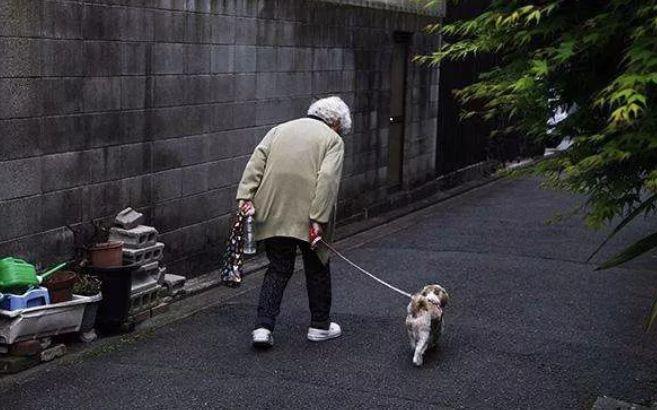 [太阳2手机app下载]适老化改造借鉴图片
