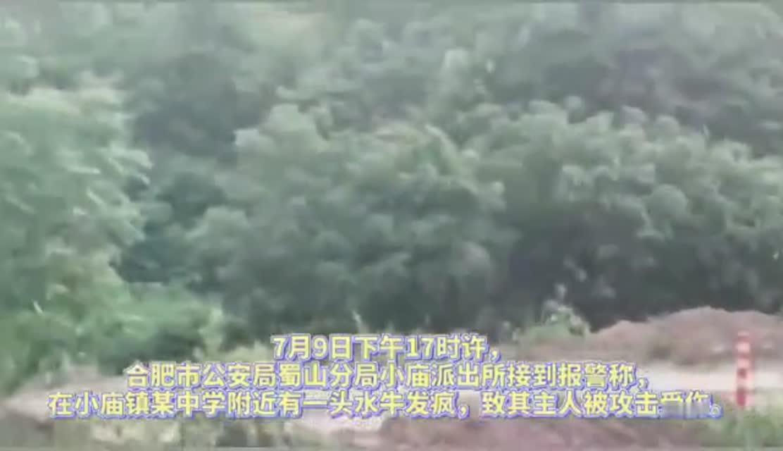 【合晚视频】水牛发疯伤人 民警狂追5公里开枪击毙