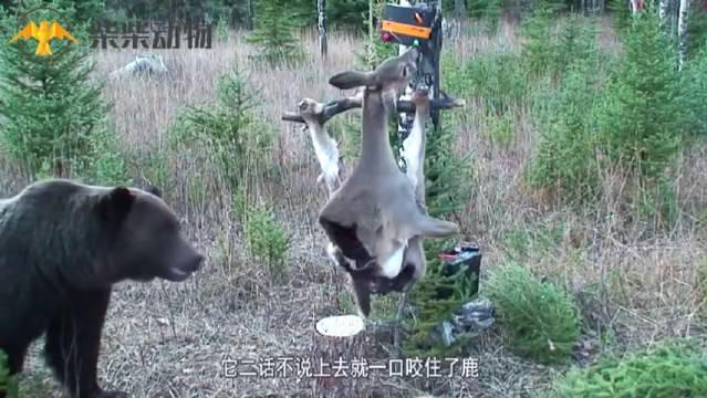这就是癞狗熊蟆想吃小鹿肉么?